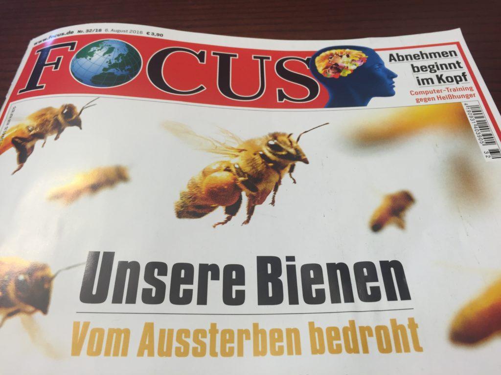 Focus Bienen